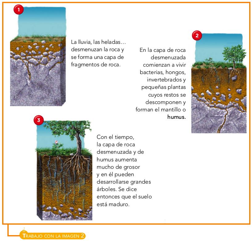 Blink activity blinklearning for Como se forma y desarrolla el suelo