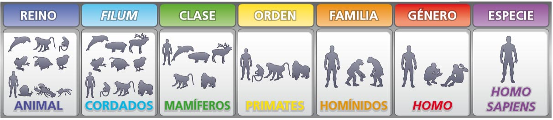 Clasificacion taxonomica del hombre yahoo dating 10
