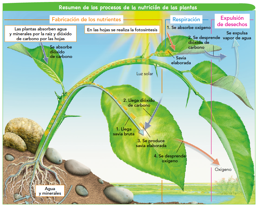 Respiracion De Las Plantas Gif: Blink Activity