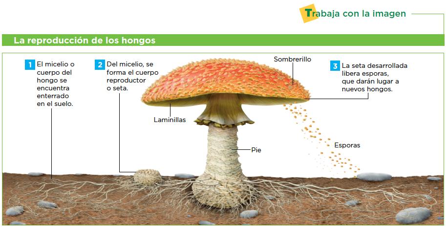 Como curarse del hongo en los pies