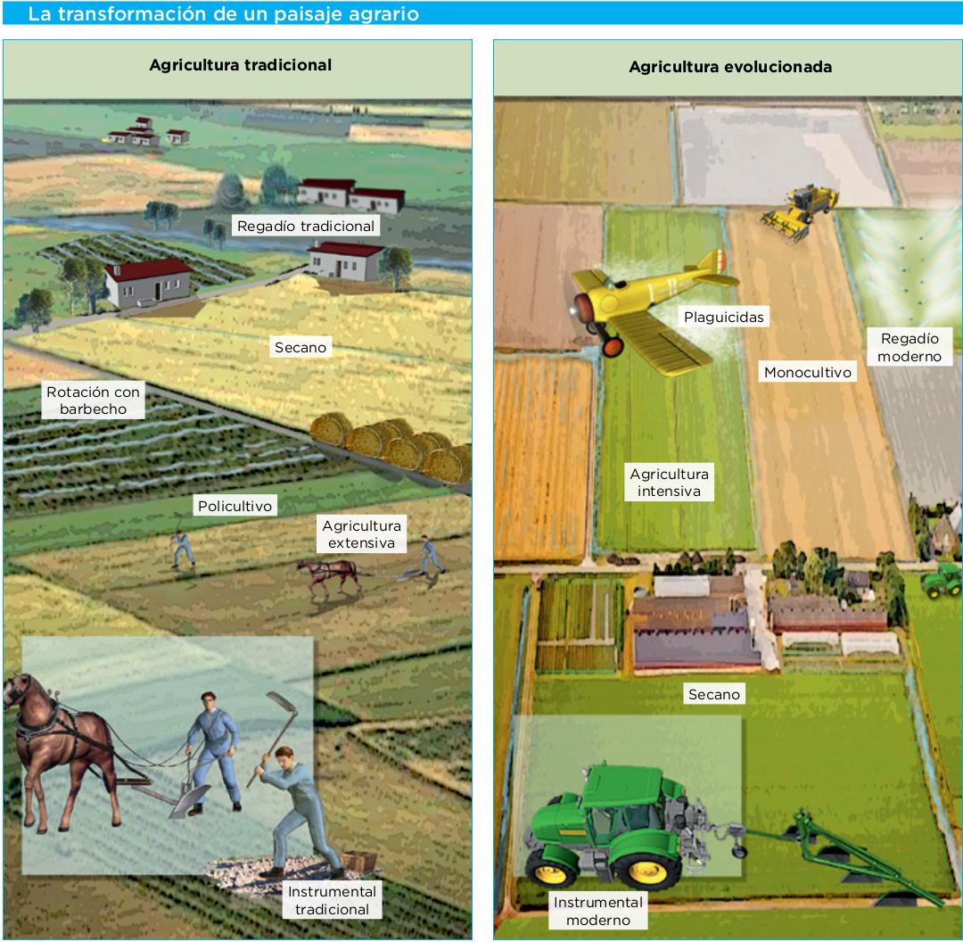 Resultado de imagen para agricultura tradicional a la agricultura intensiva