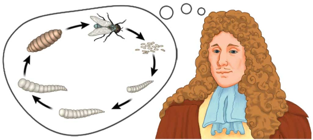francesco redi the scientific method Scientific method long ago, many people believed that living things could come from nonliving things  in 1668, an italian biologist, francesco redi, did experiments to prove that maggots did not come from meat one of his experiments is shown below redi placed pieces of meat in several jars he divided the jars into two groups he covered.